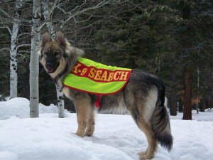 cricketk9searchandrescue.jpg